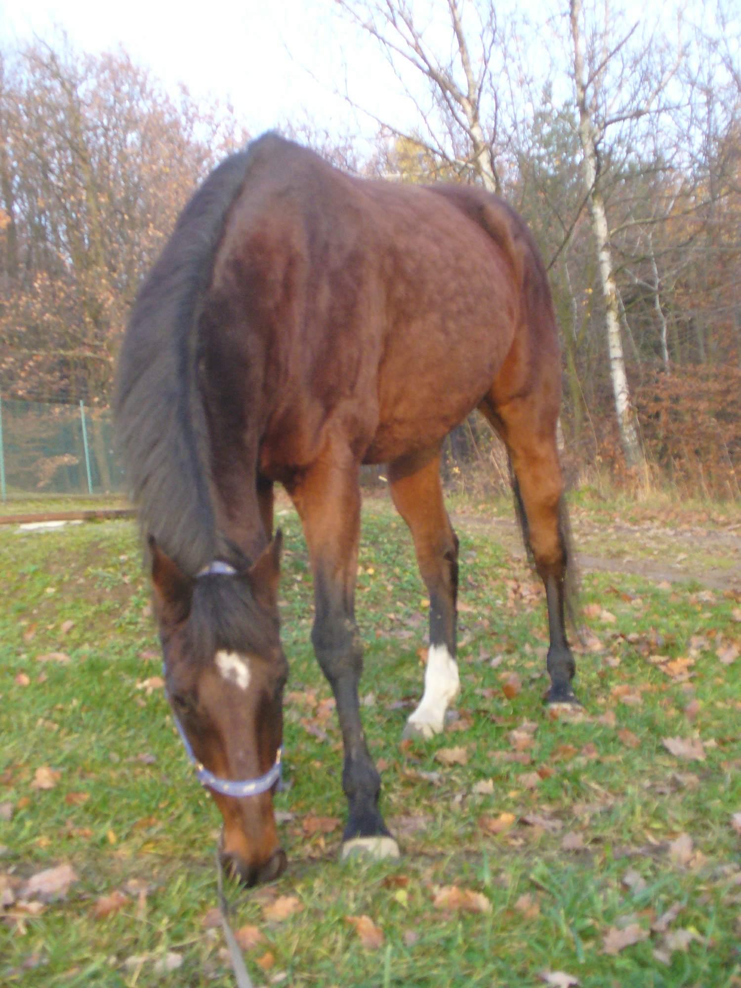 koně podzim - jaro – Sylva Hanzlíková – album na Rajčeti 284feaad79