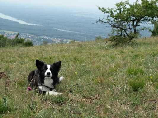 Na Hundheimskom kopci